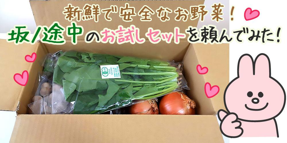 農薬や化学肥料に頼らないお野菜・坂ノ途中のお試しセットを頼んでみました!
